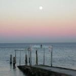 La ceinture de Vénus sur la plage d'Elwood