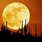 Le lever de la lune