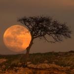 L'Arbre de la Lune bleue