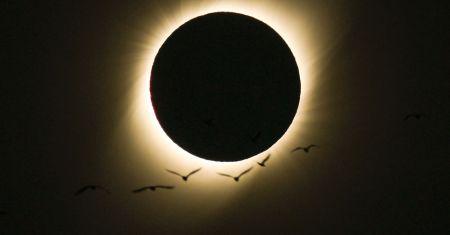 Oiseaux pendant une éclipse totale de soleil