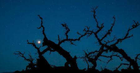 Éclipse sur des chênes nus