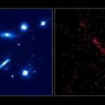PKS1127-145: Vue d'un quasar -