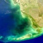 Mystérieuse eau noire dans la baie de Floride -