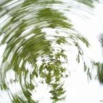 Filé de feuilles