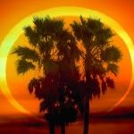 L'éclipse annulaire du 26 janvier 2009