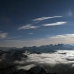 Chien des Pyrénées
