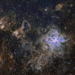 La toile cosmique de la nébuleuse de la Tarentule