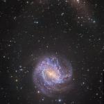 Les courants d'étoiles de M83