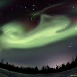 Chien polaire sur l'Alaska