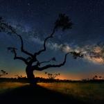 L'arbre galactique