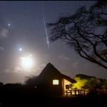 Brillante Tauride sur le Kenya -