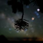 L'arbre décoré d'étoiles