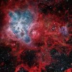 La toile cosmique de la Tarentule
