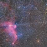 Météorite, comète et mouette