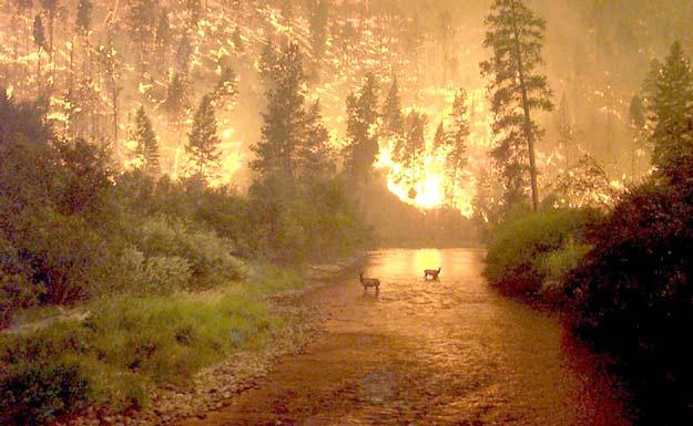 Incendie sur Terre
