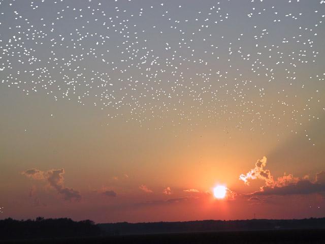 Une nuée d\'étoiles