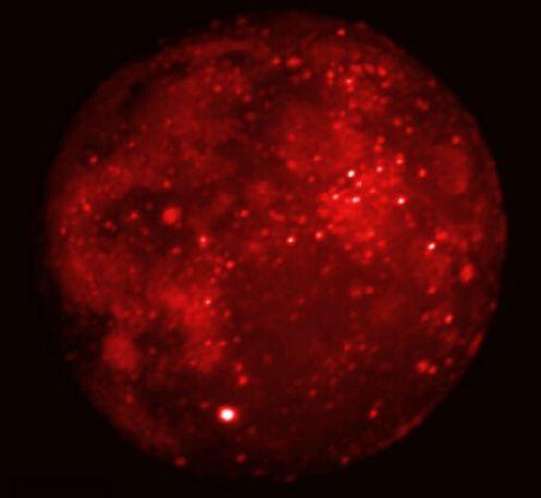 Lune éclipsée en infrarouge