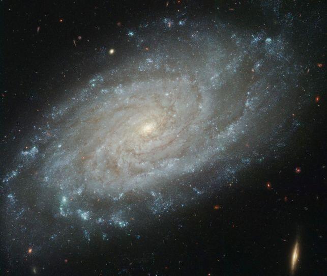 NGC 3370 : une vue plus fine