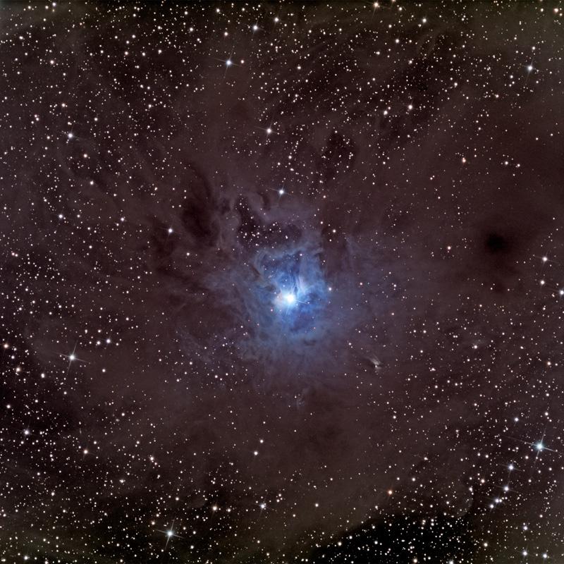 Iris dans un champ d\'étoiles