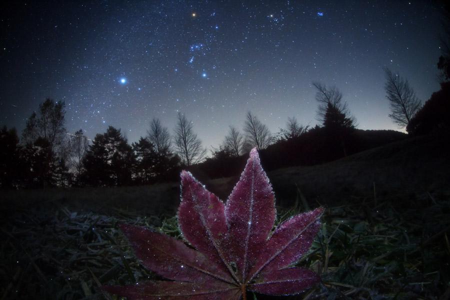 Ciel d'automne à la feuille givrée