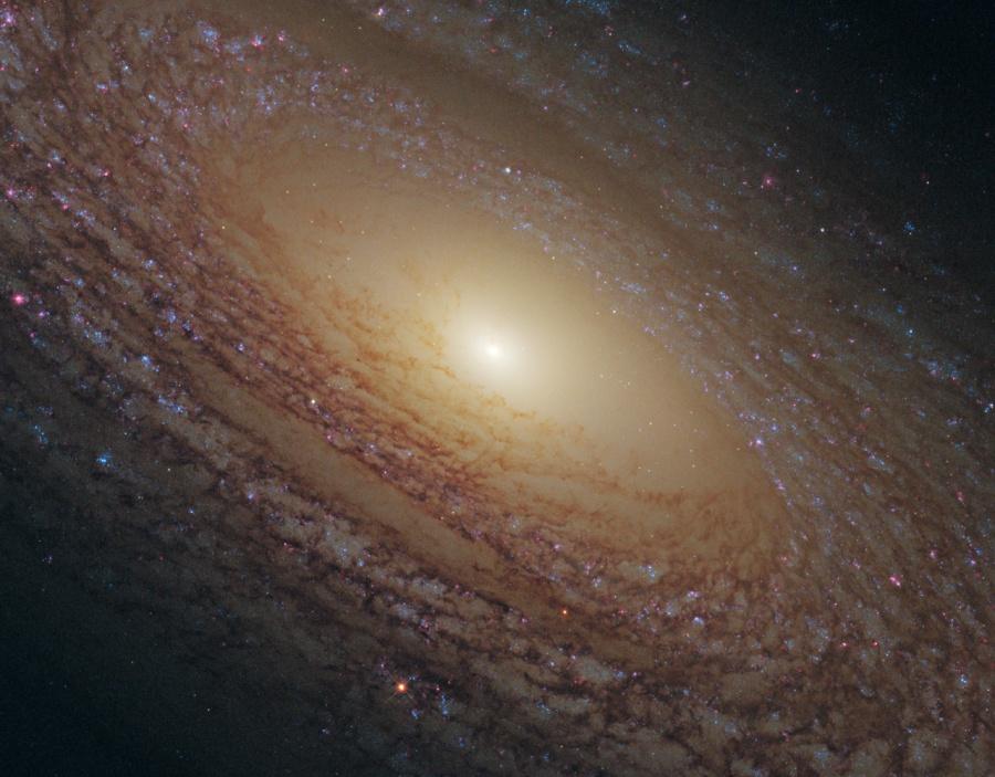 La galaxie spirale NGC 2841 en gros plan