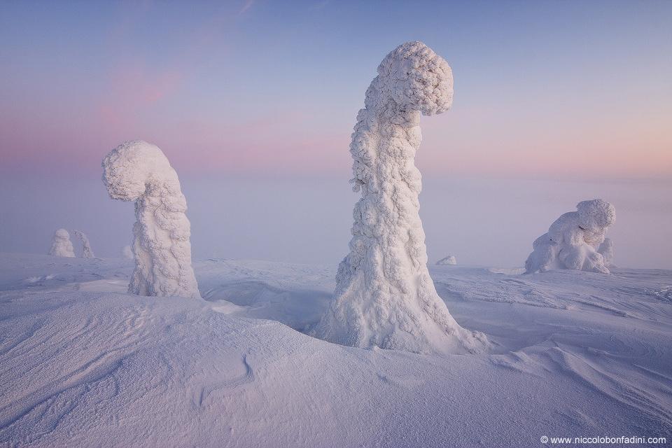 Etranges sentinelles de l\'Arctique
