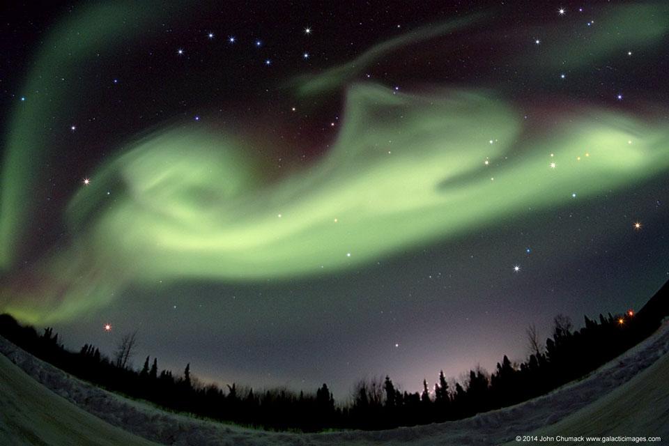 Chien polaire sur l\'Alaska