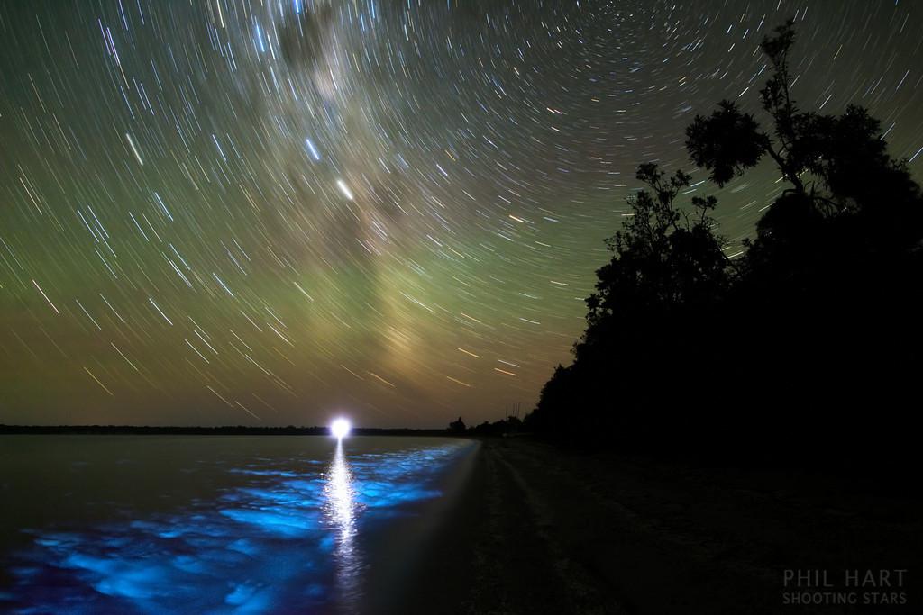 La nuit bioluminescente