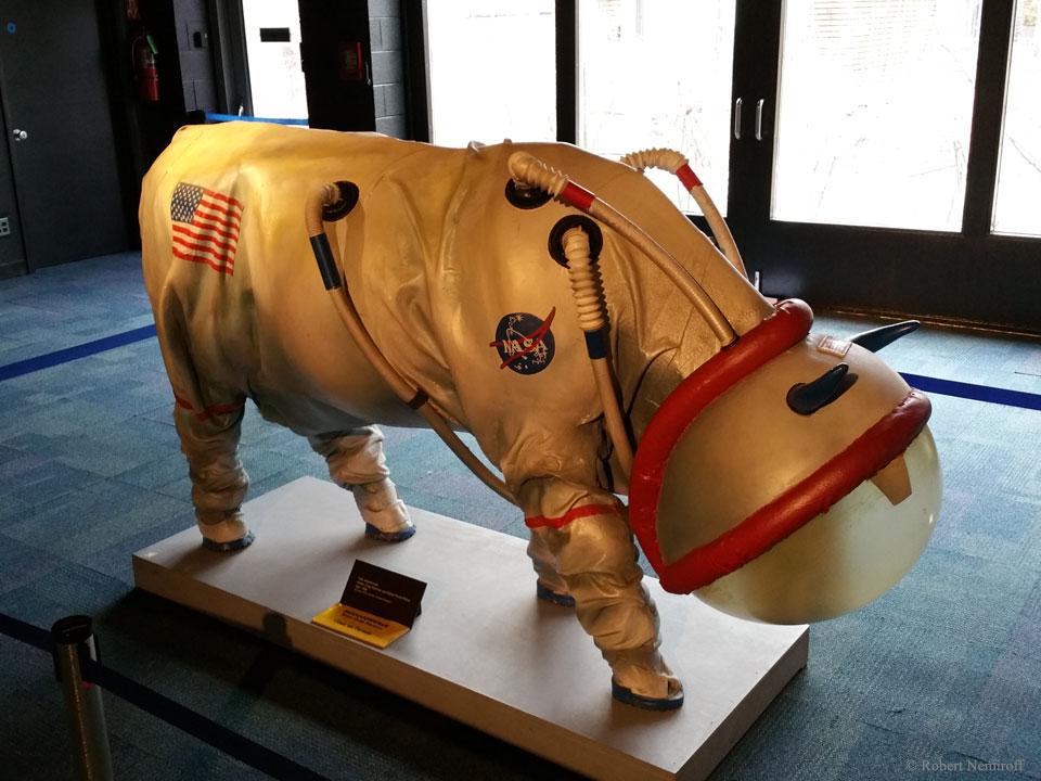 Un bond de géant pour l\'espèce bovine