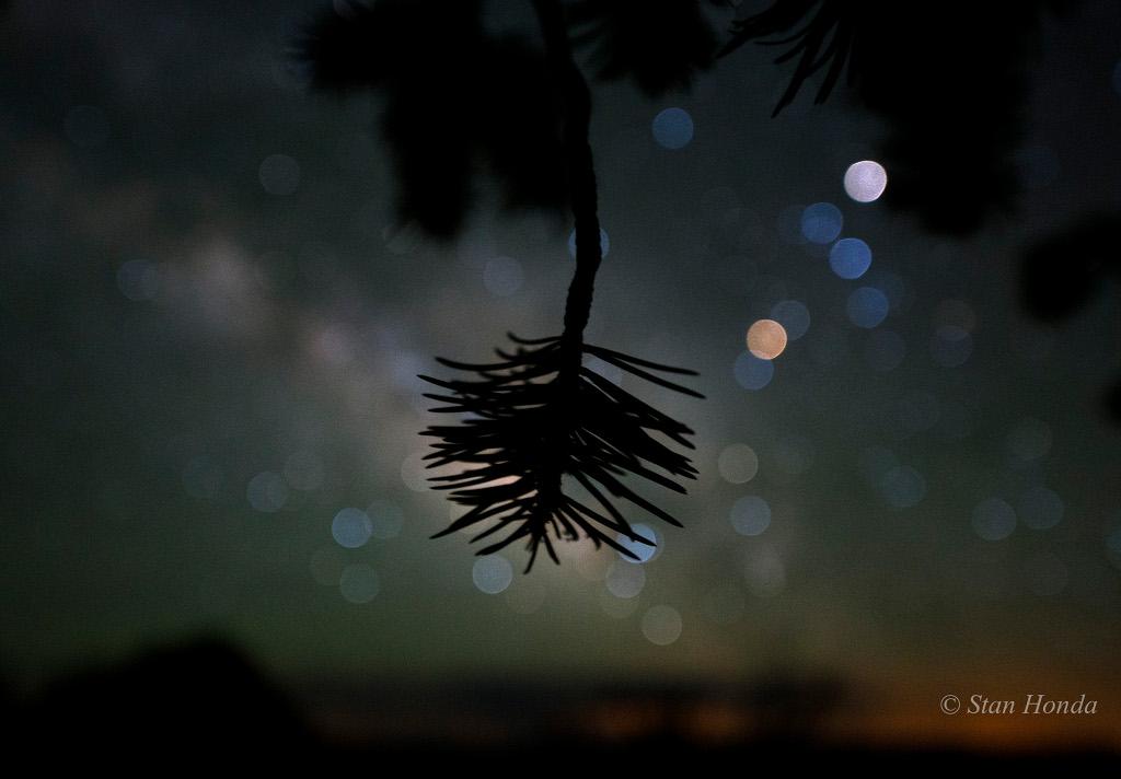 L\'arbre décoré d\'étoiles
