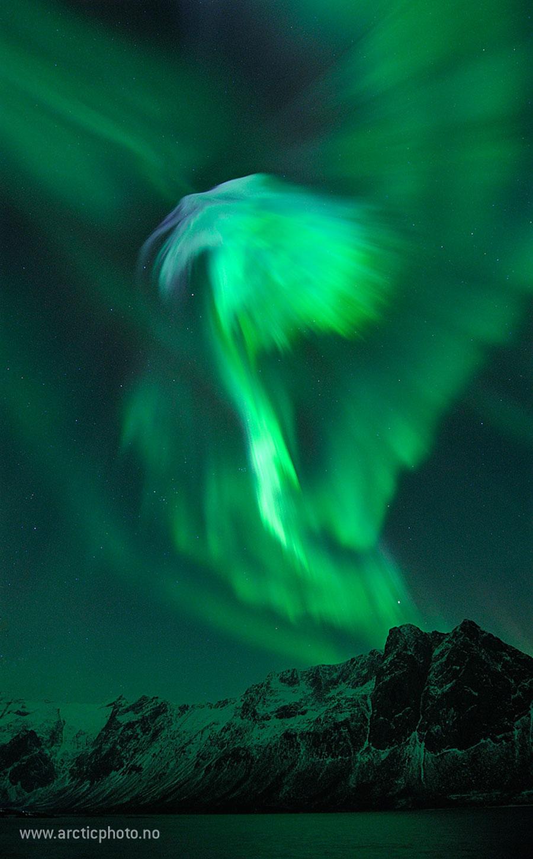 Aigle d\'aurores sur la Norvège
