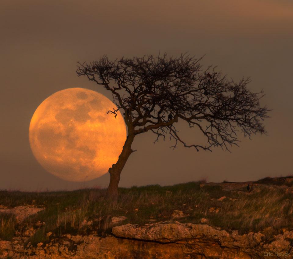 L\'Arbre de la Lune bleue