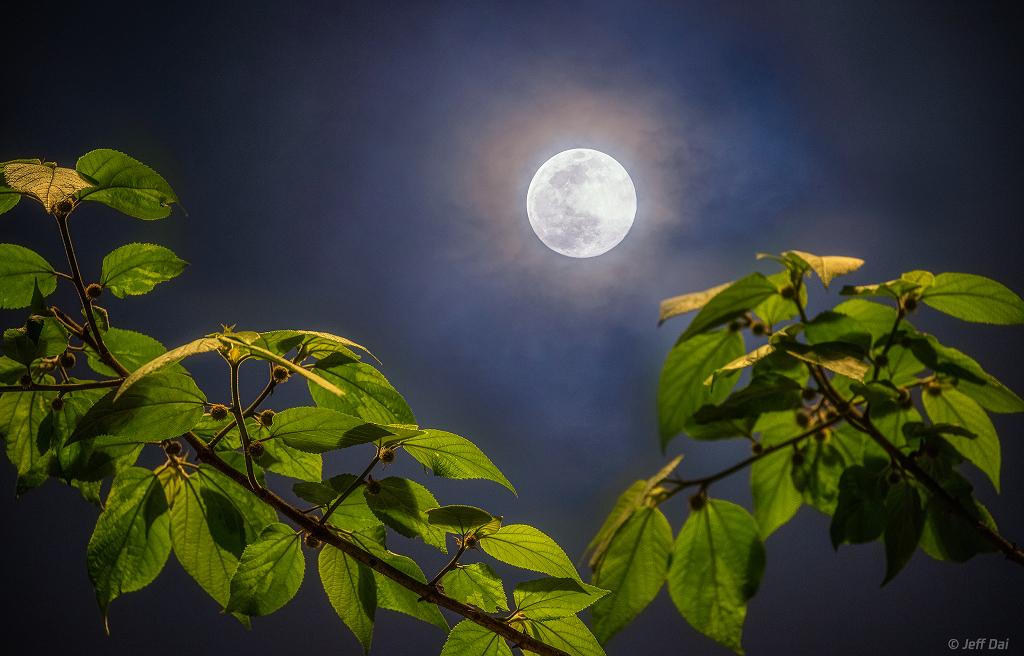 Pleine Lune de printemps