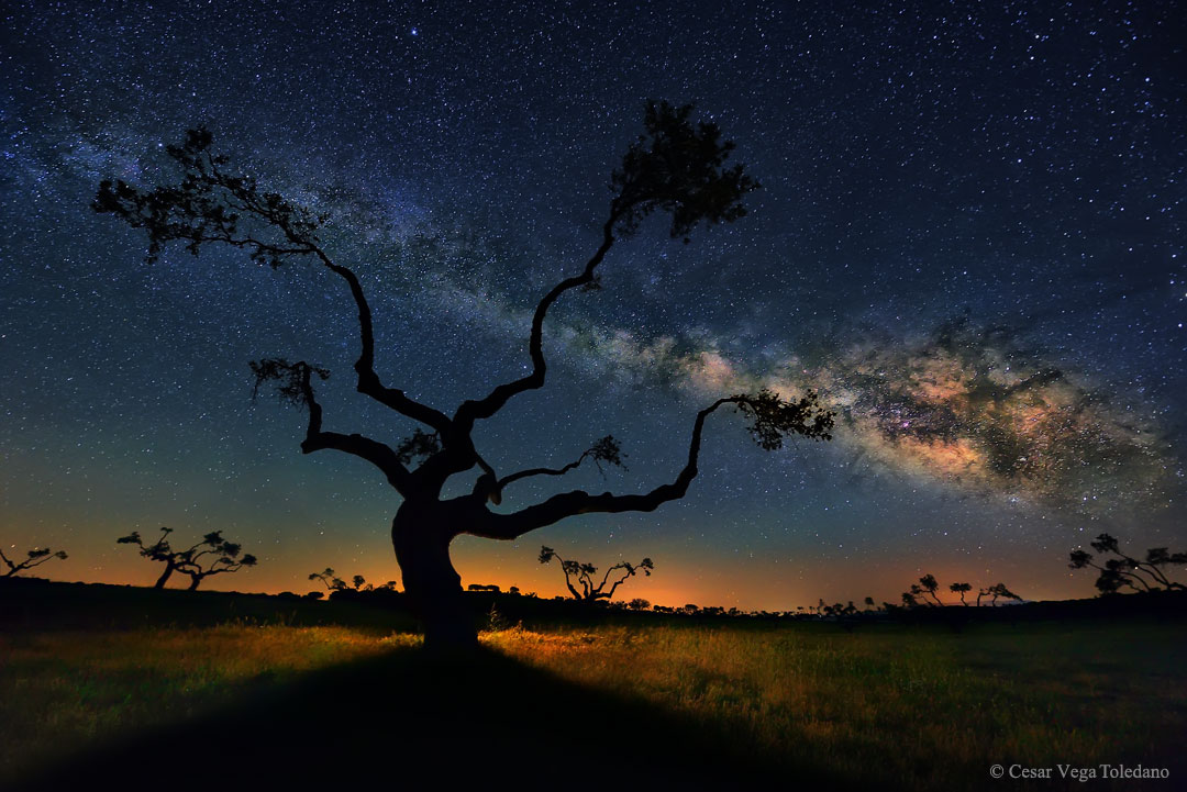 L\'arbre galaxie